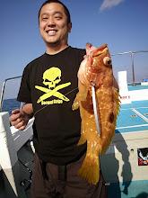 Photo: いろいろ釣ります。 今度はキジハタ!