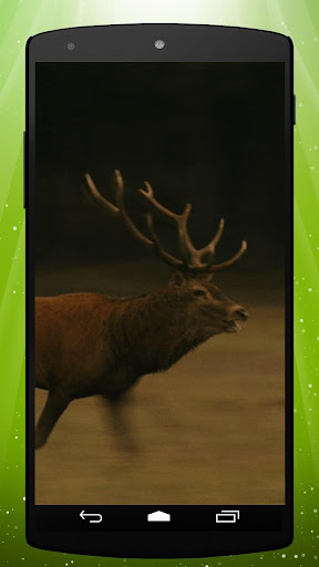 Deer Live Wallpaper