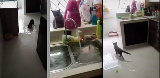 S'porean wakes up to flooded home on multiple occasions thanks to cat leaving tap running