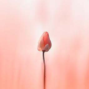 __only one__ by Bagus Kusumawanto - Nature Up Close Flowers - 2011-2013