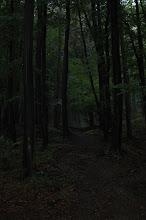 Photo: Cesta na Pajštún - tmavá verzia pre melancholikov.