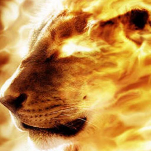 HD Fire Lion Wallpaper - Google Play पर ऐप्लिकेशन