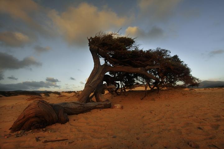 Piegata dal vento di maurilu