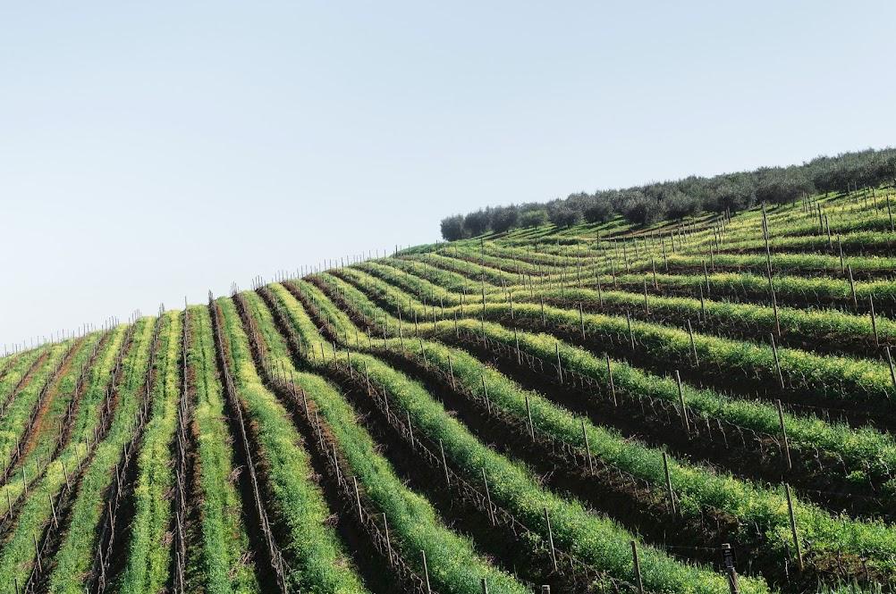 mooie-wijnregio