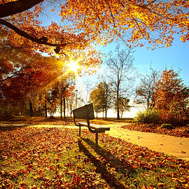 As It Passed My Flying By by Phil Koch - City,  Street & Park  City Parks ( canon, wisconsin, bench, arts, joy, leaves, sun, love, autumn, shadow, path, dramatic, flowers, light, inspired, trending, colors, green, beautiful, camera, forest, woods, shadows, rural, field, sunburst, fineart, season, unity, fall, outdoor, popular, peace, meadow, trees, sunrise, hope, inspirational,  )