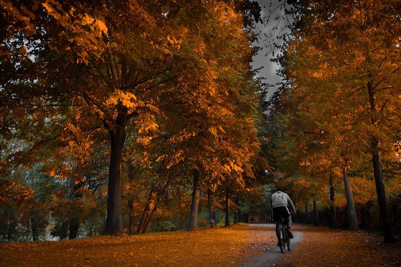 Gli alberi iniziano a vestirsi di giallo di versil