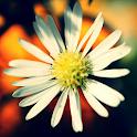 live wallpaper daisy icon