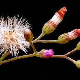wildy by SANGEETA MENA  - Nature Up Close Other plants