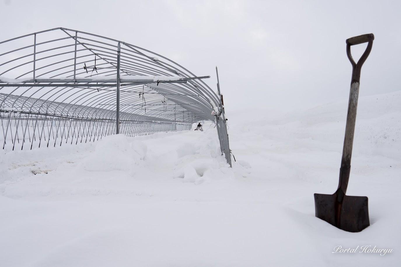 ハウスの除雪作業