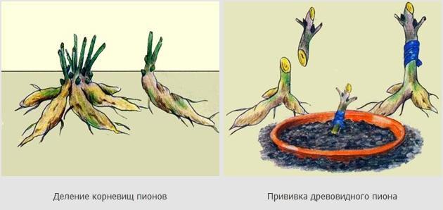 http://s004.radikal.ru/i207/1108/7c/c922207858c1.jpg