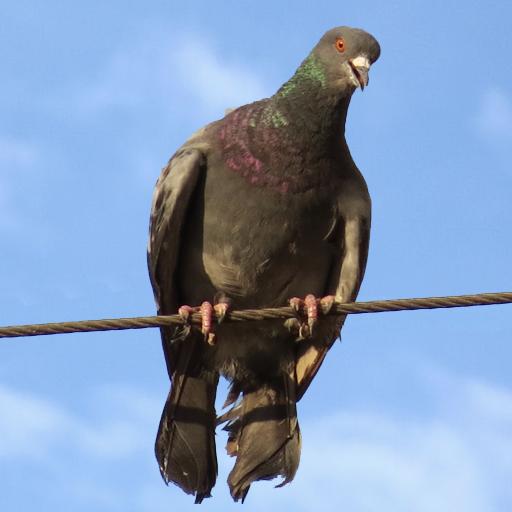 街机の鳥類の攻撃 LOGO-記事Game