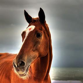 by Sandeep  Kumar - Animals Horses