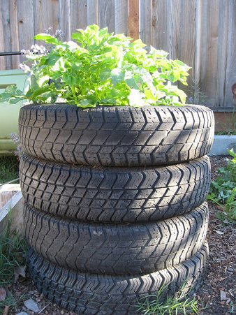 tire potatoe.jpg