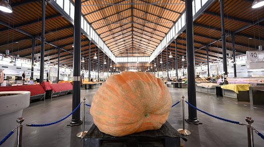Una calabaza gigante de 456 kilos, cultivada en Almería, en el Mercado Central
