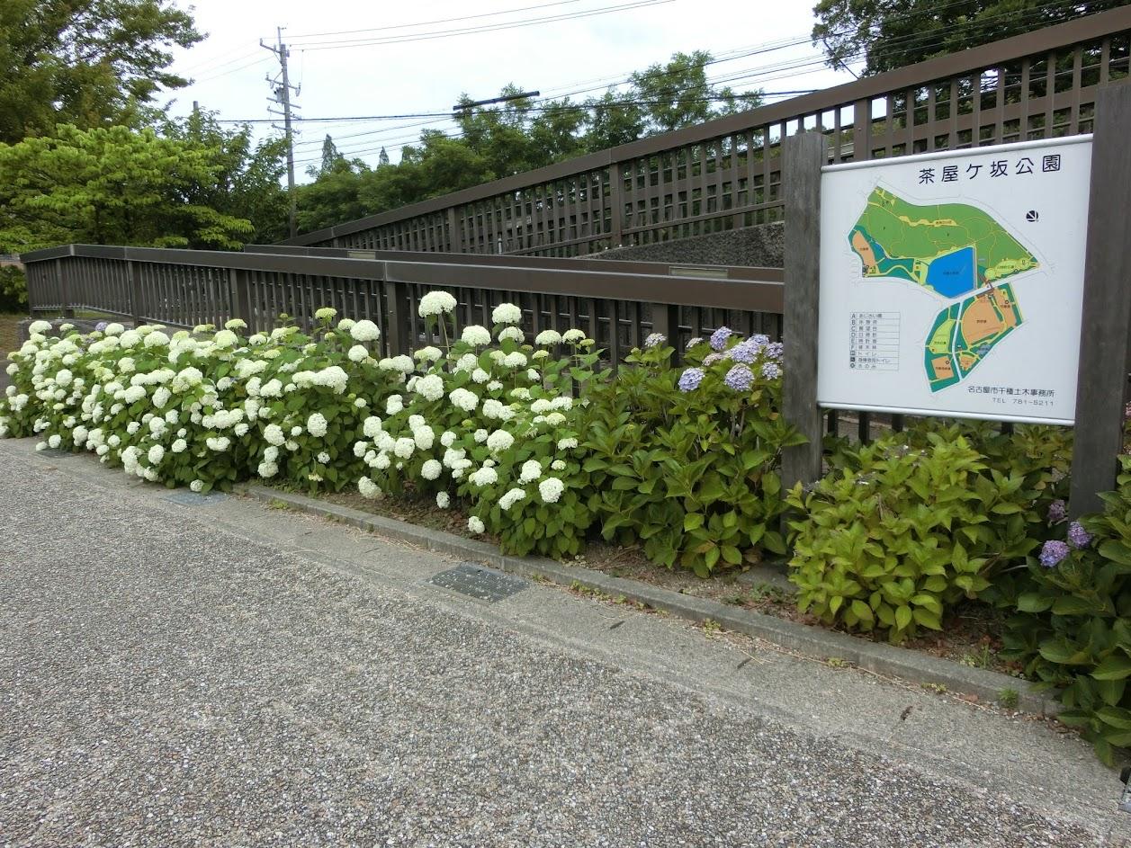 茶屋ヶ坂公園あじさい橋付近