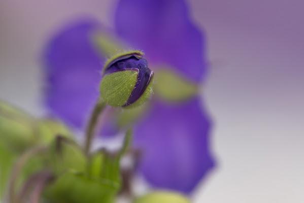 Micromondo viola di jandmpianezzo@bluewin.ch