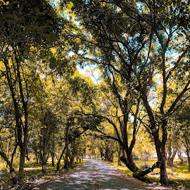 A Summer Forest by MUHTAROM カメラマン - Landscapes Forests ( spring, forest, fall, street, yellow, trees, summer,  )