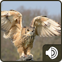 Owl Sounds icon