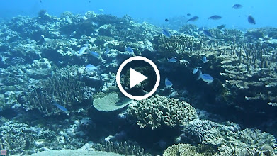 Video: Pago Pago, AS - June 18, 2013 - My uncle and I scuba diving in Fagatele Bay.