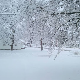 Winter Wonderland by Susan R Thomas - Uncategorized All Uncategorized