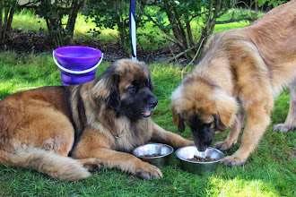 Photo: Harvest et Ibanez, mangeons en famille