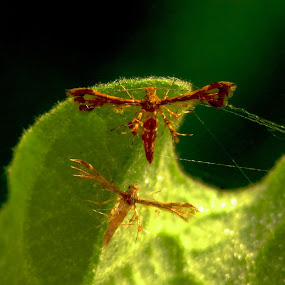 by Rizal Marsa - Animals Insects & Spiders (  )
