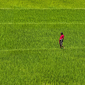 :: Daily Routine :: by Rahul Chakraborty - Landscapes Prairies, Meadows & Fields (  )