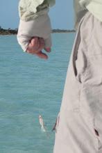 Photo: Andros Island Gotcha at the ready