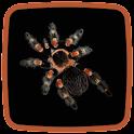 Tarantula Live Wallpaper icon