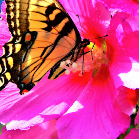 Butterfly_10 by Michelle Kelly - Novices Only Flowers & Plants