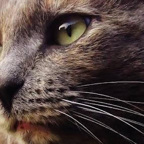 by Lauren McGuirt - Animals - Cats Portraits