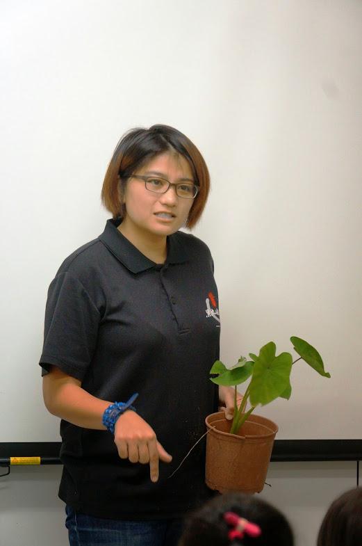 台北景點推薦【黑丸嫩仙草】樹林觀光工廠DIY體驗