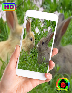 Cute Animals Wallpaper (HD) for PC-Windows 7,8,10 and Mac apk screenshot 4