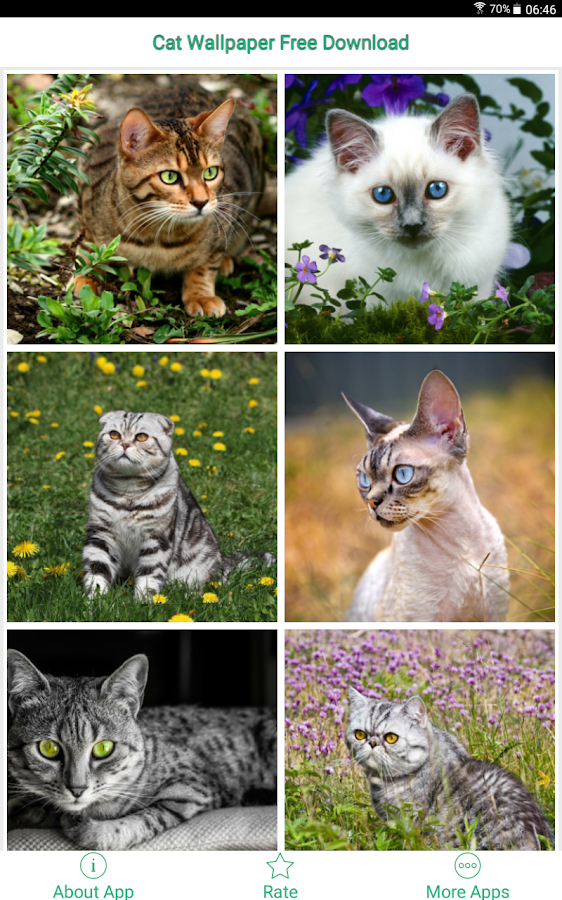 Cat Wallpaper Free Download - Android Apps on Google Play