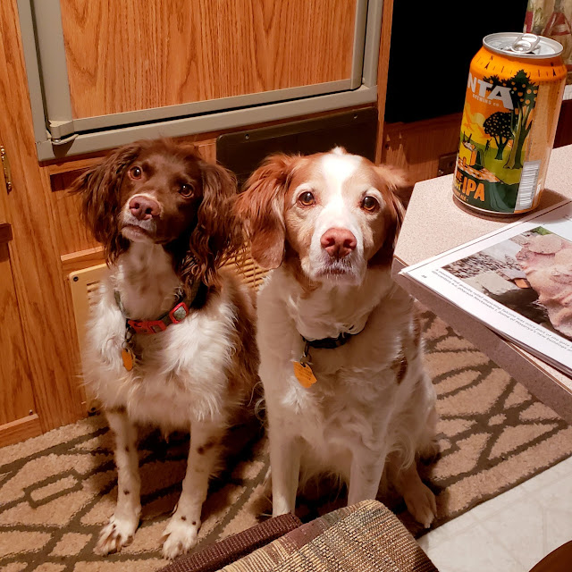Boulder and Torrey begging for some of my dinner