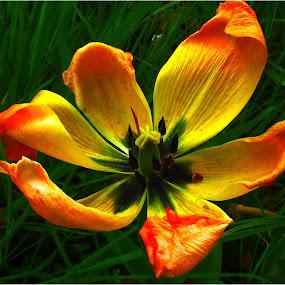 by Fred Starkey - Flowers Flowers in the Wild (  )