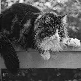 by Mark Luftig - Black & White Animals