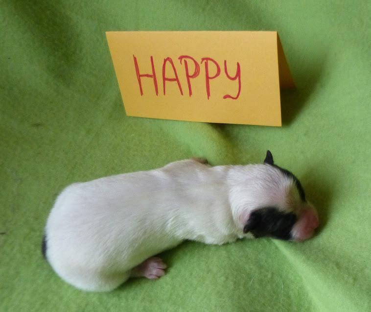 Happy nach der Geburt