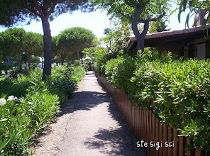 Photo: allée du rond-point autour de la résidence les Amandines