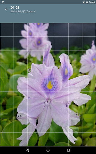 Jigsaw Puzzle: Flowers screenshot 19