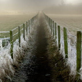 Cold Fence by Adrian Wilson - Landscapes Prairies, Meadows & Fields ( m62, orange, winter, red, cold, fog, frost, light trails, mist )