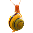 Snail file APK for Gaming PC/PS3/PS4 Smart TV