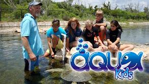 Aqua Kids thumbnail