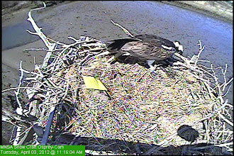 Photo: Marking there nest site