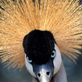 Up close  by Ursula Herbst - Animals Birds