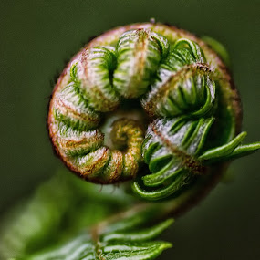 curled by Kevin Towler - Nature Up Close Leaves & Grasses ( plant, fern, wild, macro, nature, macro photography, green, nature up close, leaves, close up,  )