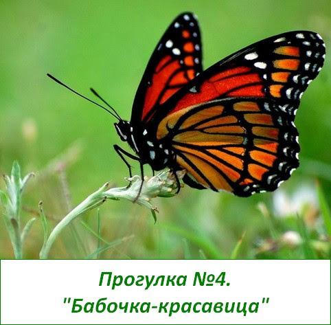 развивающие прогулки бабочка