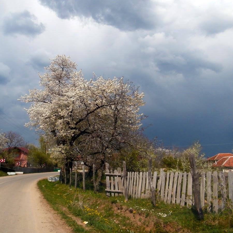 by Simona Limberea - Nature Up Close Trees & Bushes