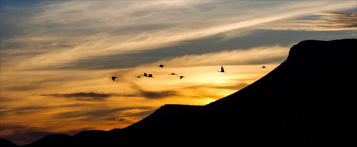 <b>Category finalist: Endangered Africa -</b> Blue cranes fly across a Great Karoo sunset in the Eastern Cape, near Graaff-Reinet, South Africa. According to conservation organisation @Birdlife, this species has declined rapidly, largely owing to poisoning, powerline collisions and loss of its grassland breeding habitat.