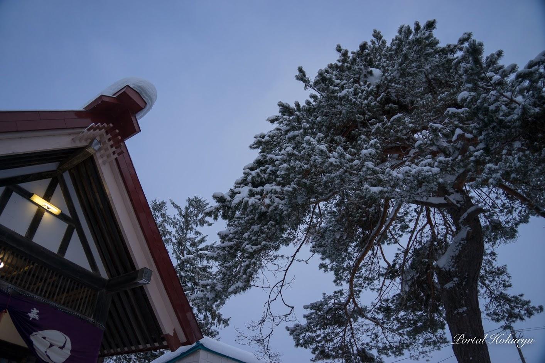 神竜神社の松